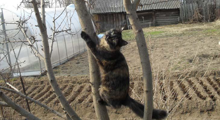 кошка3